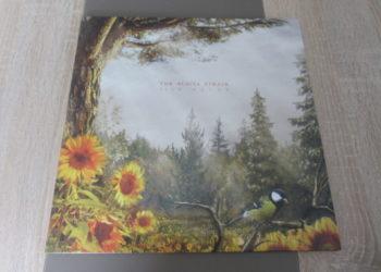 """Dance Gavin Dance – Neue Single """"Three Wishes"""" / Video aus Fan-Einsendungen / Album """"Afterburner"""" am 24.04. auf Rise Records 1"""